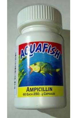 Ampicillin 60cap Bottle